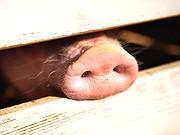 Schweinegrippe, Medien