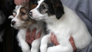 Tierschutzverein Landkreis Dachau