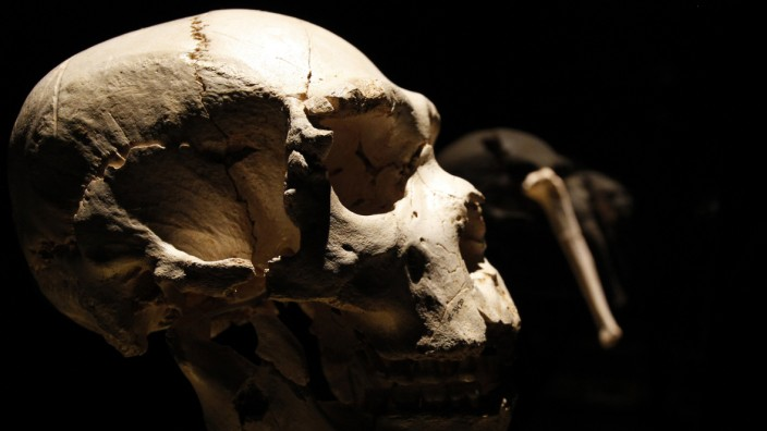 Schädel eines Homo heidelbergensis