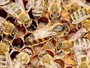 Bienenstock, dpa