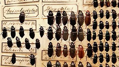 Charles Darwin 200 Jahre Darwin (26)