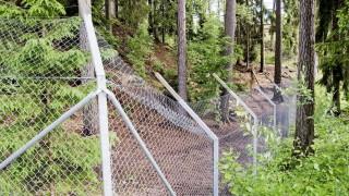 Wolfsrudel tötet Wärterin in schwedischem Tierpark