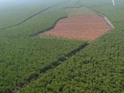 Gerodeter Regenwald auf Sumatra, Foto: dpa