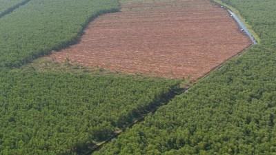 Lebensmittel Ökologischer Raubbau