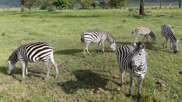 Ngorongoro-Krater Tansania Safari