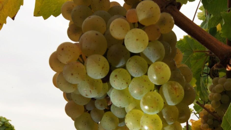 Deutschlands kleinstes Weinanbaugebiet