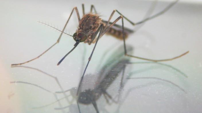 Was hilft gegen Mücken? - Gesundheit - Süddeutsche.de