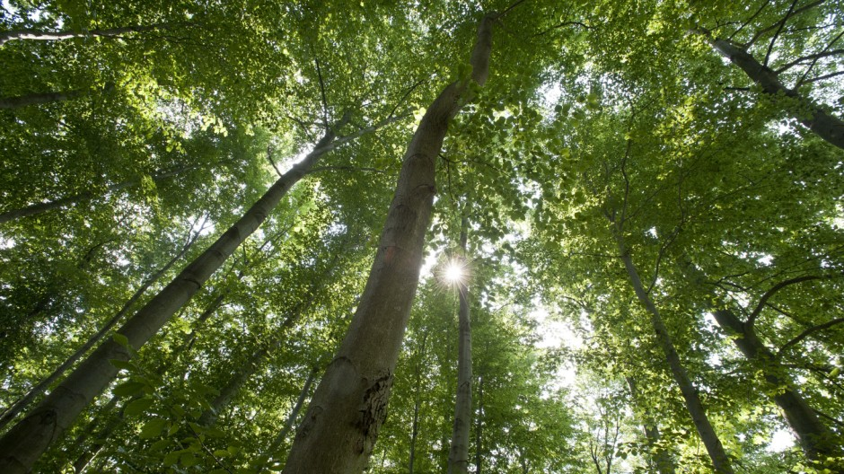 Wälder binden Kohlendioxid