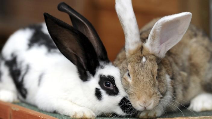 Norddeutschlands Tierheime sind zur Urlaubszeit ueberfuellt