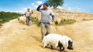 """Komödie """"Das Schwein von Gaza"""" von Sylvain Estibal"""