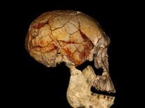 """Mit Hilfe eines Computers haben Wissenschaftler einen jetzt vorgestellten Unterkiefer und den Schädel KNM-ER 1470 verbunden. Offenbar gehören beide Fossilien zur selben Menschenart - vermutlich dem """"H"""