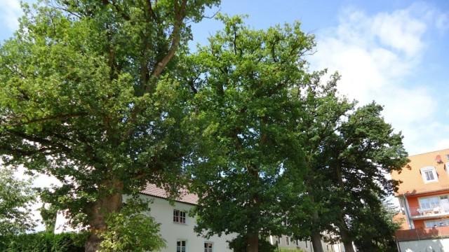 Indersdorf Eichen
