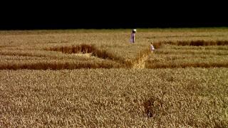 Ufo-Gläubige Kornkreis gibt Rätsel auf