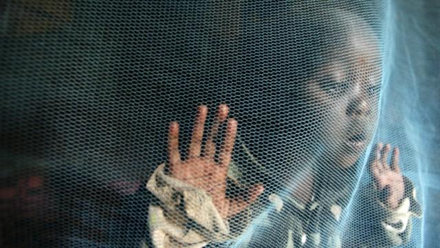 Schutz bei Malaria - Forscher stoßen auf Genvarianten