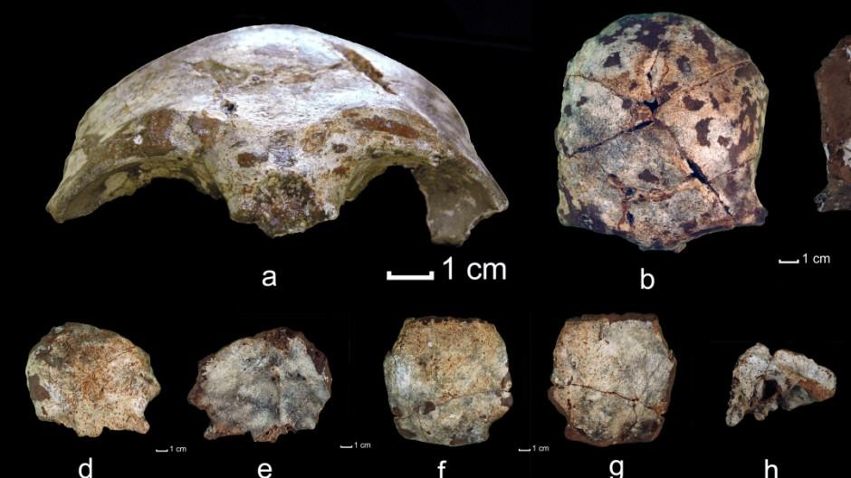 Ältestes Fossil Südostasiens