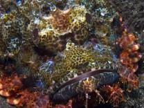 Unterwasseraufnahmen aus dem Komodo-Nationalpark in Indonesien. Über die Erdzeitalter hinweg steigt die Artenvielfalt mit der Temperatur, berichten br