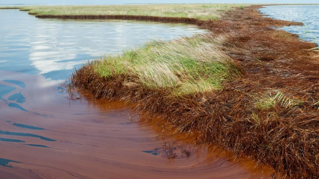 Tens of billions at stake in BP oil spill trial