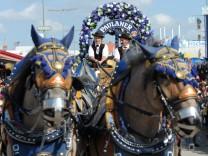 Paulaner-Pferde beim Einzug der Wiesn-Wirte.