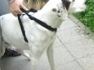 Hund Timmy mai 06
