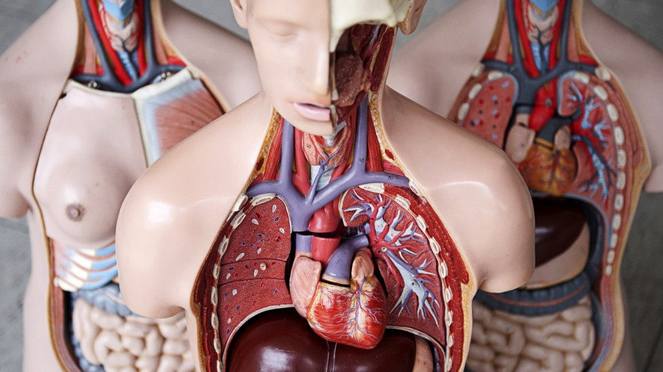 Erste Lungen-Lebendtransplantation in Deutschland geglückt