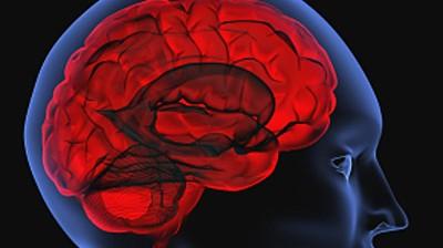Gehirnforschung Rechts oder links