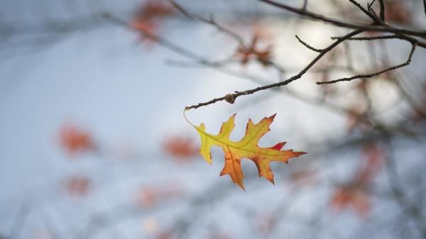 Herbstzeit ist Erkältungszeit