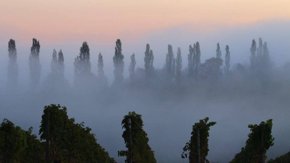 Weinlandschaft im Morgennebel