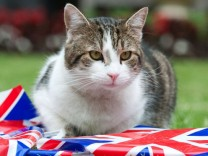 Larry the Downing Street cat sits with bunting in the garden of number 10 Downing Street in London
