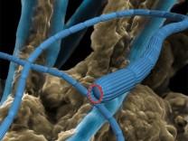 Stromleitende Bakterien