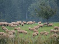 Fehler Haushaltsplanung EU Schafe