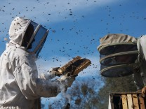 Themendienst Kino: More Than Honey