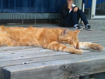 Katze an der Uni Augsburg