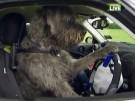 Hunde lernen Autofahren (Vorschaubild)