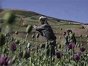 Afghanistan Opium AP