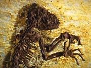 Fossil Ida, dpa