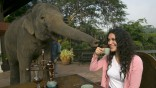 Elephant Dung Coffee Produces The World's Most Expensive Cup