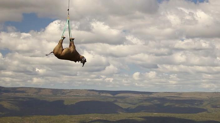 Suche nach Strategie gegen Nashorn-Wilderer