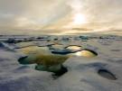 Schmelzwassertümpel in der Arktis