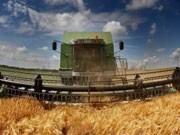 Landwirtschaft, Ernte, Mähdrescher, dpa