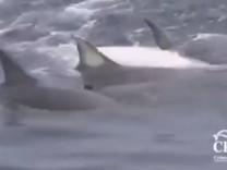 delfine helfen