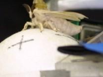 Motte fährt Roboter