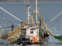 Fischfang, EU