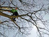 Kind klettert auf Baum