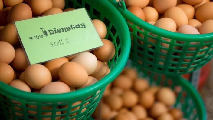 Bio-Eier aus Niedersachsen