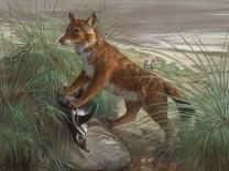 Falklandwolf