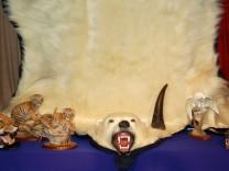Handel mit Eisbär-Fellen
