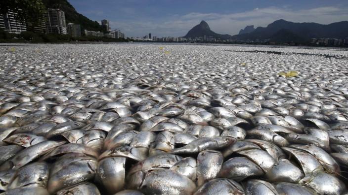 Dead fish are seen at the Rodrigo de Freitas lagoon in Rio de Janeiro