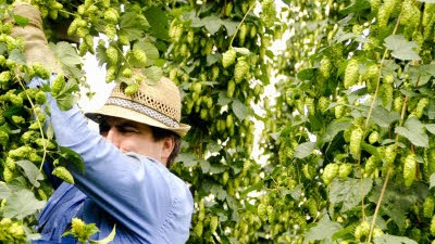 Agrarsubvention Bayern: EU-Agrarsubventionen