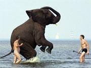 Kurioses Urlaubswissen, Badeverbot für Elefanten, dpa