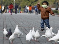 A boy looks at pigeons at a public park in People Square, downtown Shanghai